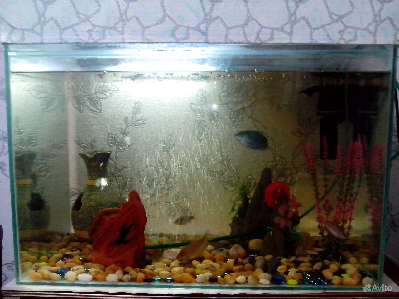 Продам аквариум в комплекте купить на Зозу.ру - фотография № 1