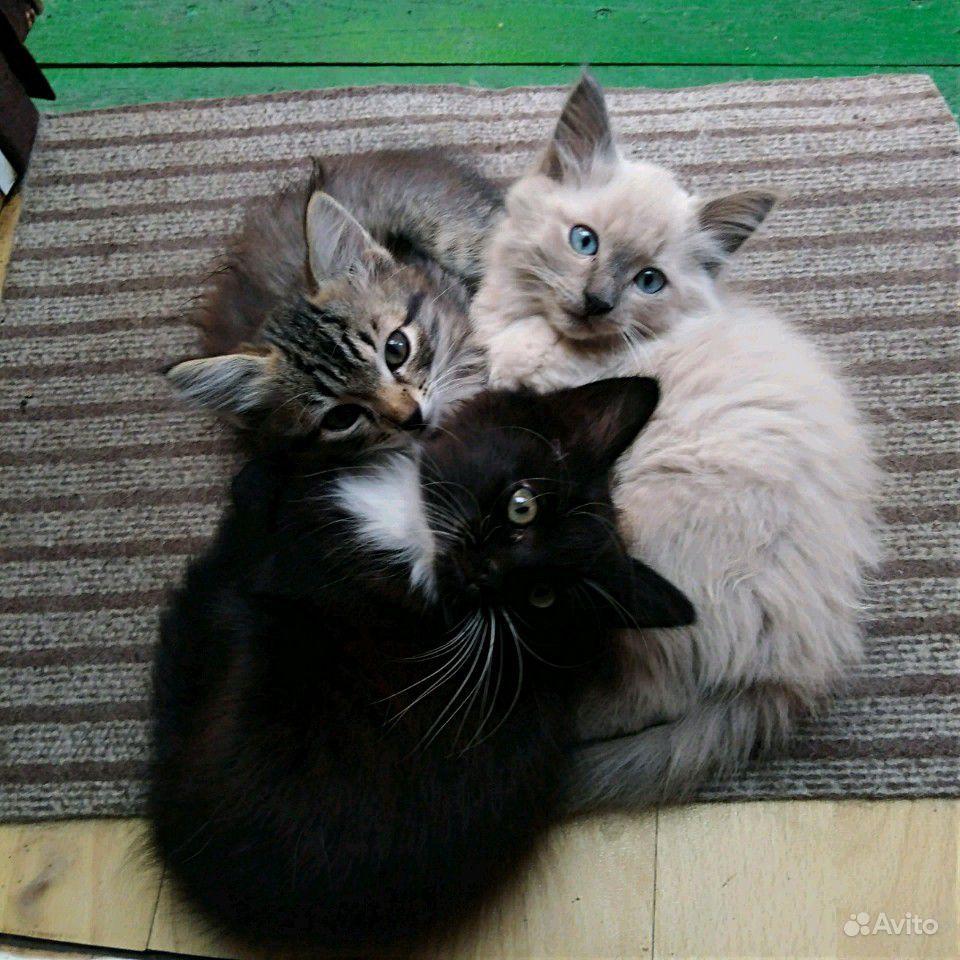 Котята в Грязях - фотография № 1