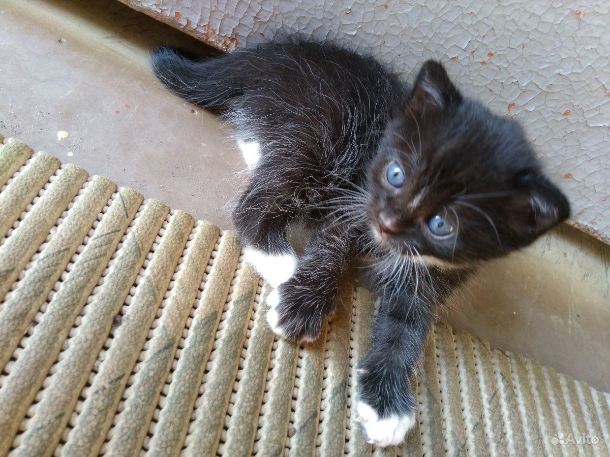 Котёнок Томас в добрые руки