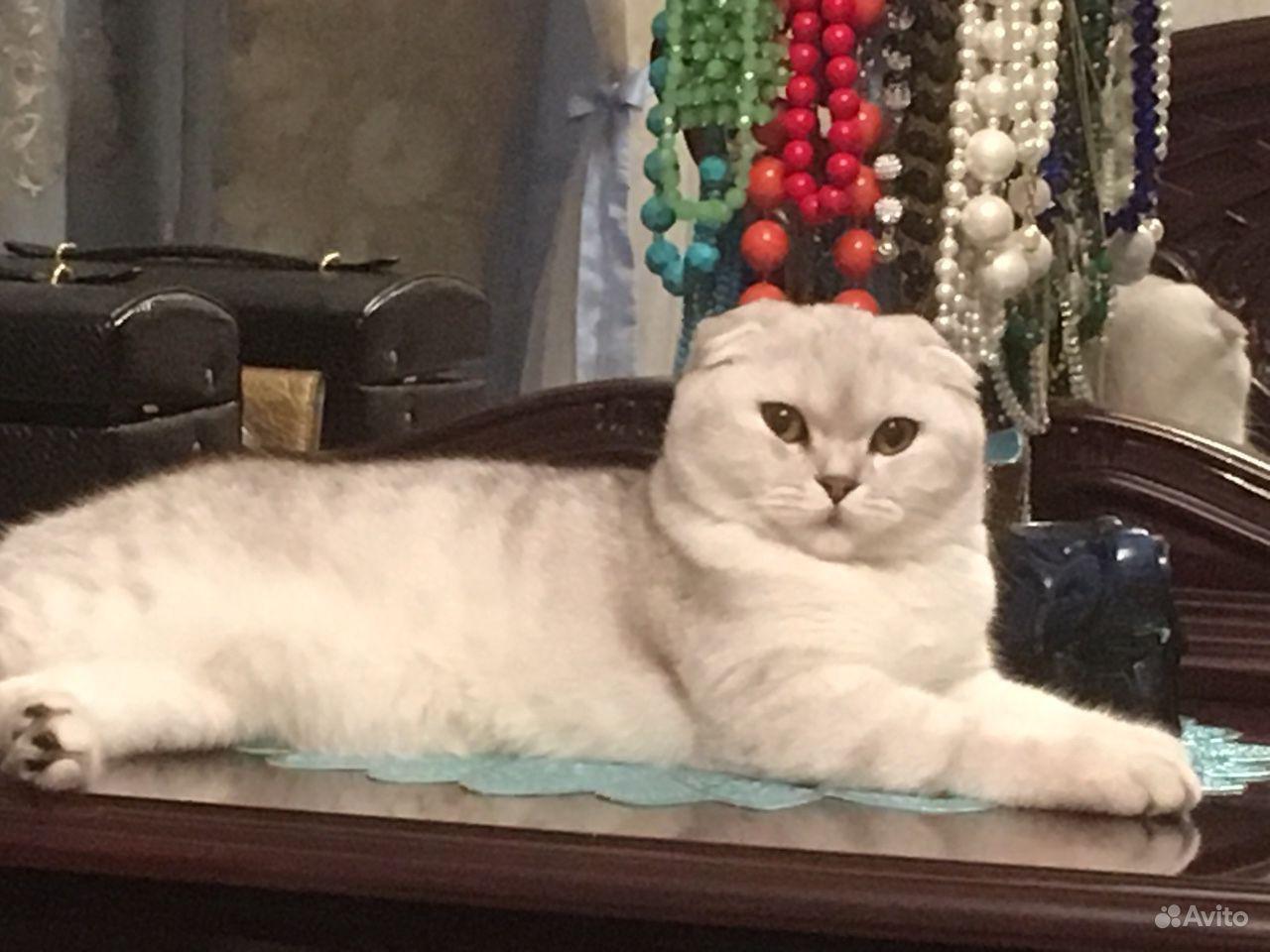 Продается Кошка - фотография № 2