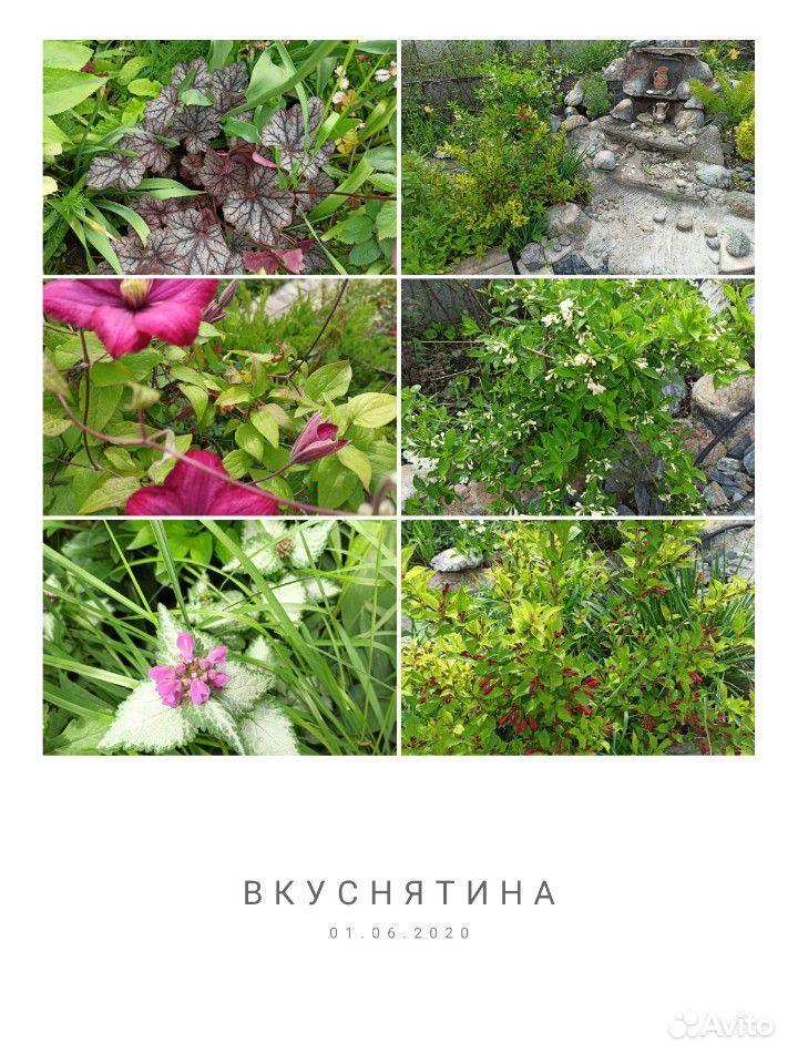 Саженцы купить на Зозу.ру - фотография № 7