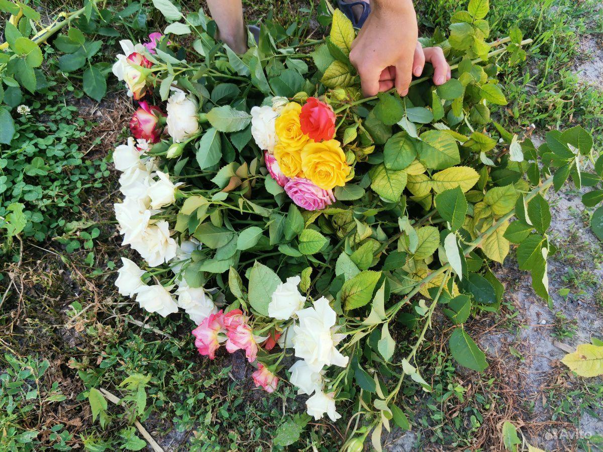 Розы на срезку. Букеты купить на Зозу.ру - фотография № 2