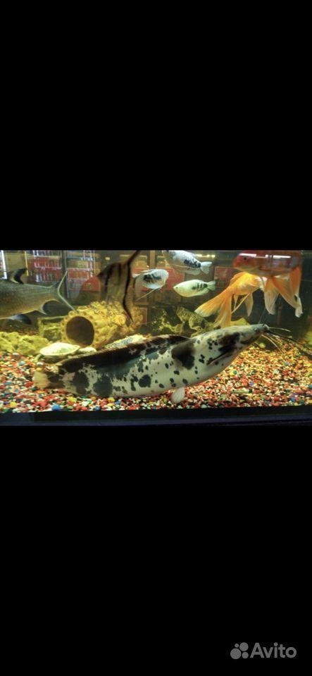 Готовый аквариум купить на Зозу.ру - фотография № 5