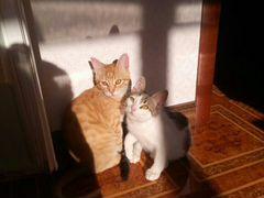 Котята-мальчики