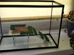 Аквариум для пресноводной черепахи