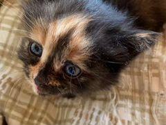 Котята в добрые и хорошие руки)