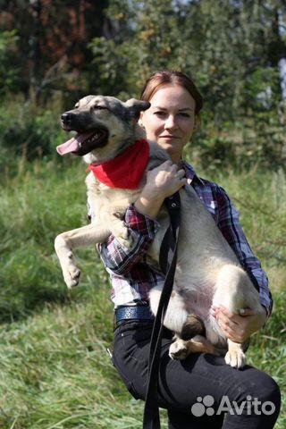 Весёлый щенок Джой в дар в добрые руки купить на Зозу.ру - фотография № 5