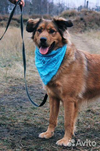 Собака из приюта в дар купить на Зозу.ру - фотография № 8