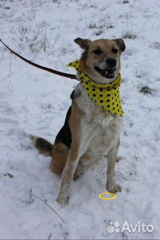 Собачка Мия в дар купить на Зозу.ру - фотография № 2