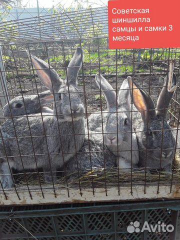 Кролики 89202417955 купить 6