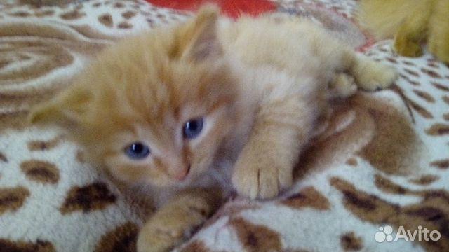 Кошечка в добрый дом купить 5