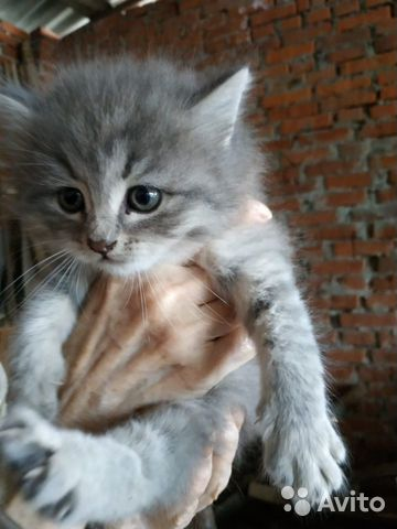 Отдам даром замечательных котят купить 3