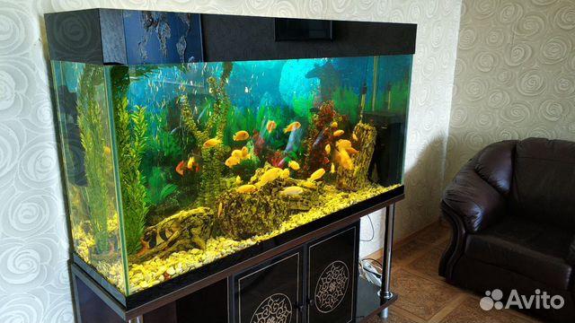 Аквариум с системой и рыбками  купить 3