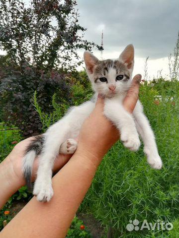 Котенок в добрые руки 89003669300 купить 1