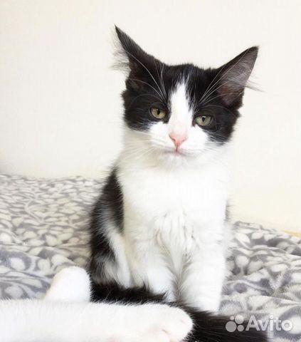 Ищу дом для котенка  89219446280 купить 3