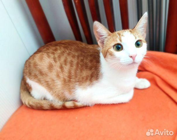 Котик и кошечка ждут своих хозяев  89038039728 купить 7
