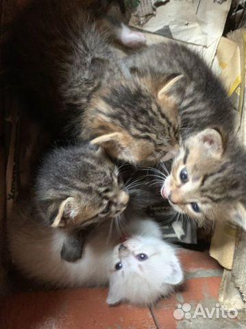 Кошка  купить 4