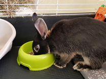 Кролик 6 месяцев