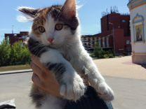 Предлагаем котят