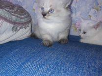 Очень красивые котята