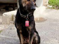 Коленька нуждается в любящей семье — Собаки в Геленджике