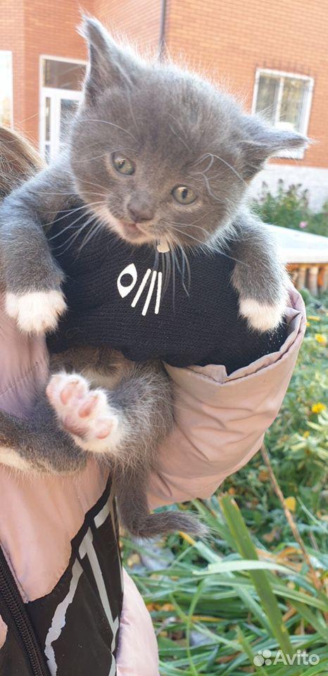 Kätzchen kostenlos in gute Hände  89292004111 kaufen 3