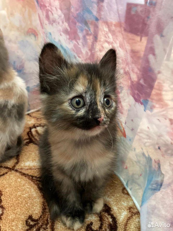 Отдадим котят в добрые руки  89050613439 купить 3