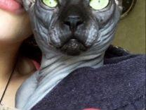 Опытный кот приглашает на вязку