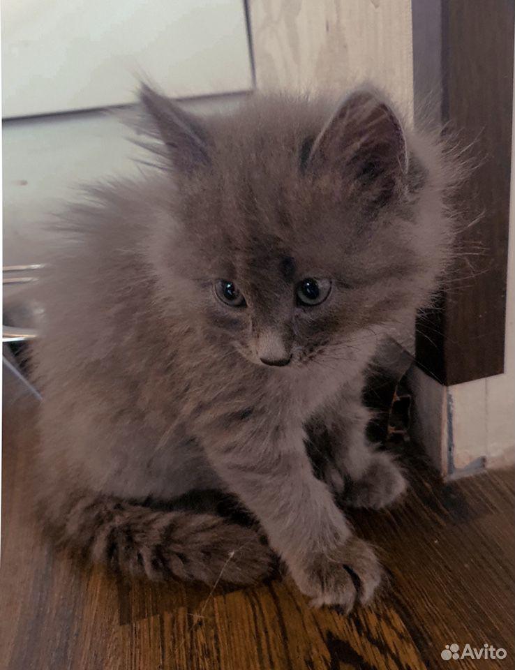 Кошка  89101089693 купить 4