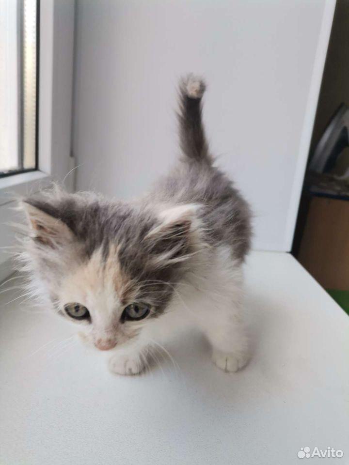 Котенок ищет дом  89997246628 купить 2