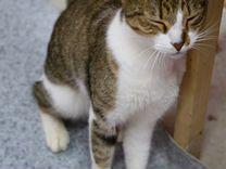 Молодой кот в добрые руки
