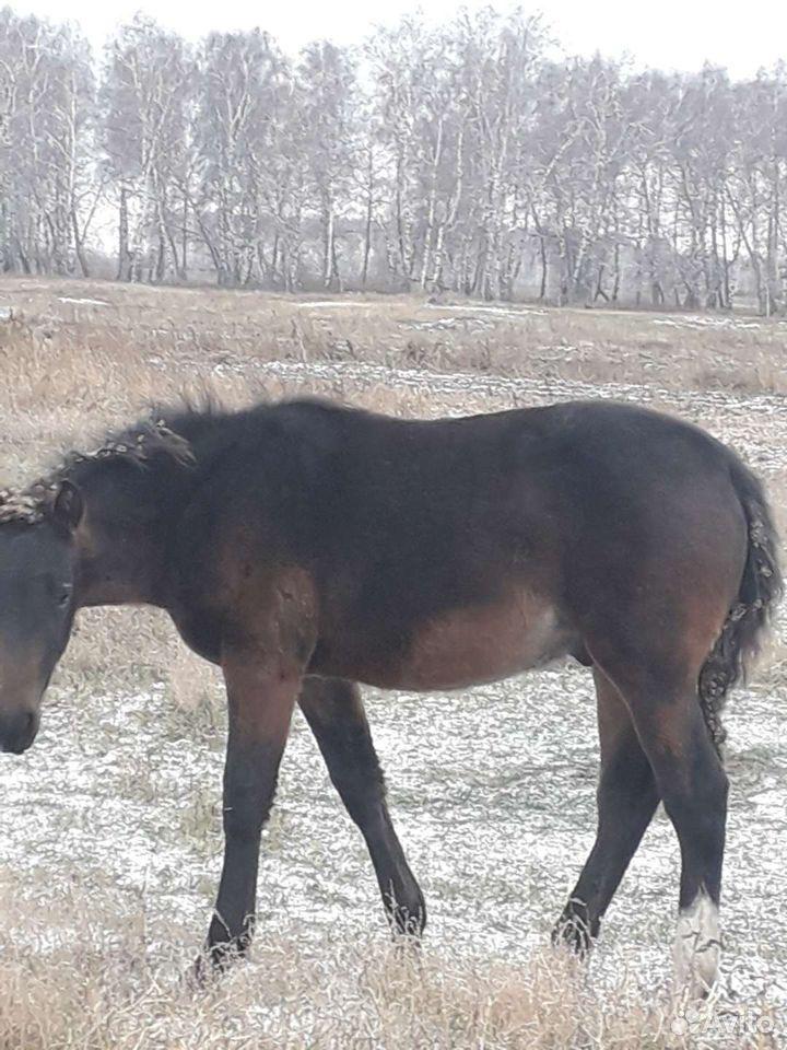 Лошадь  89081039886 купить 6
